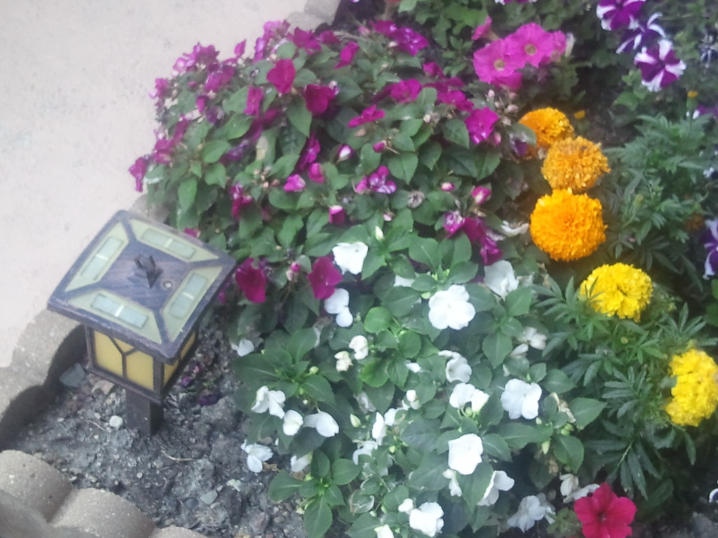My Premium Plants.
