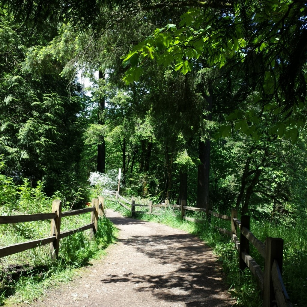 An entry point on Wildwood Trail in Portland's Forest Park