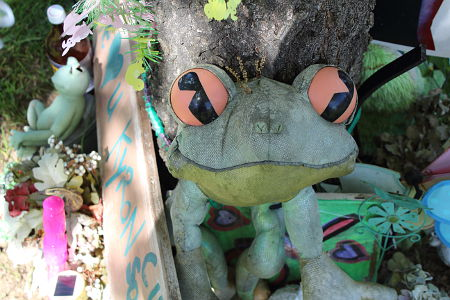 Kyron's science project was on the red-eyed tree frog. There are many of these frogs at his Wall of Hope.
